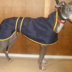 greyhound-rain-coat-piped-lining