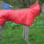greyhound-snood-coat