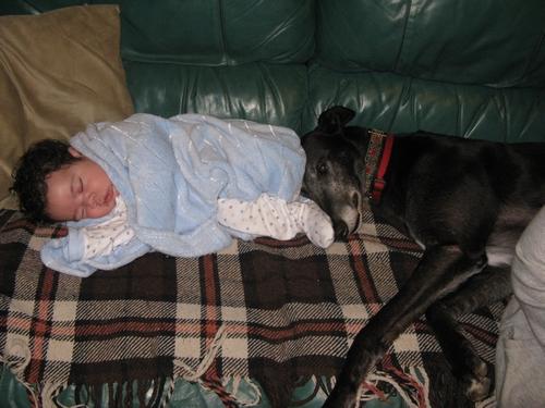 Dan black greyhound and baby