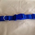 greyhound house collar