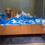 One of the recent new beds that has been made by Paul and Jane, modelled by Lyric.